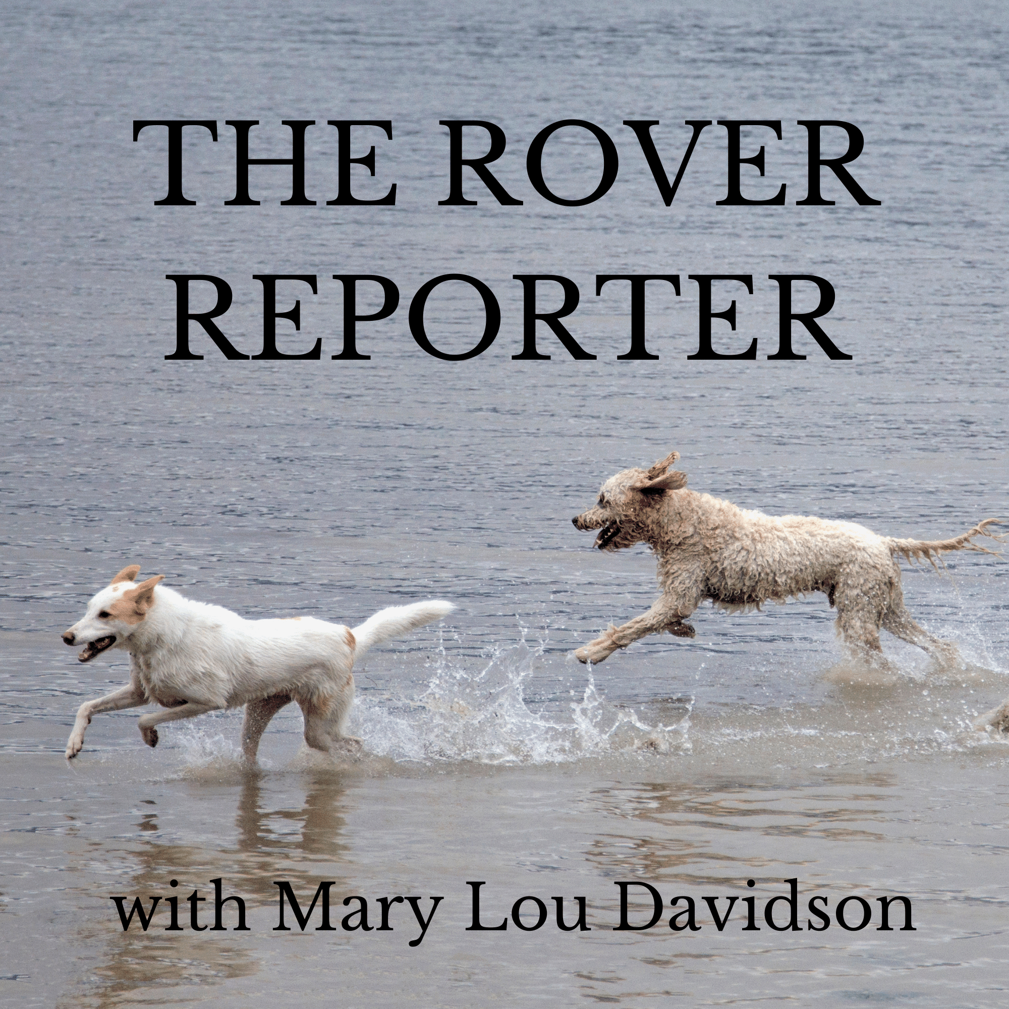 The Rover Report